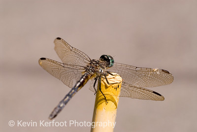Dragonfly0007a