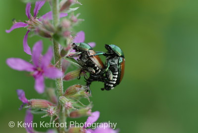 Insects0050