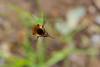 Bug3250