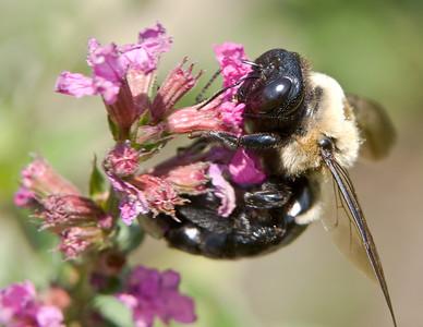 Aug 3 Bee-136