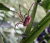 Unkown Spider