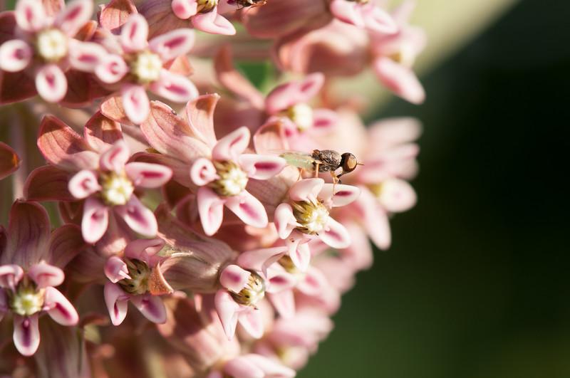 Fly (6)