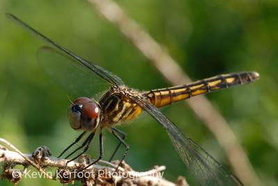 Dragonfly2007_06_26_0025