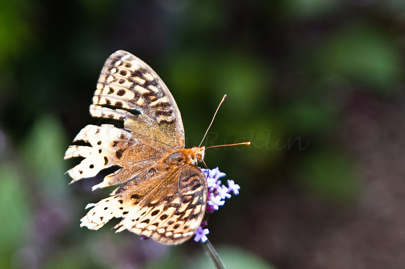 Tattered Wings Butterfly by