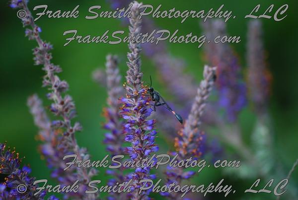 Missouri - bug -n- flower