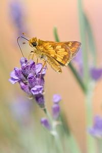 Moth Flower-1