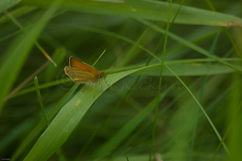 Grass Hopper on Grass