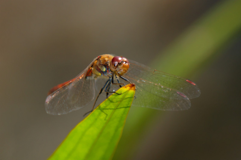 Insects 003