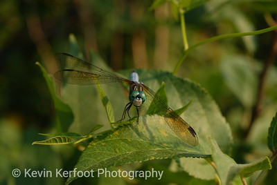 Insects0045