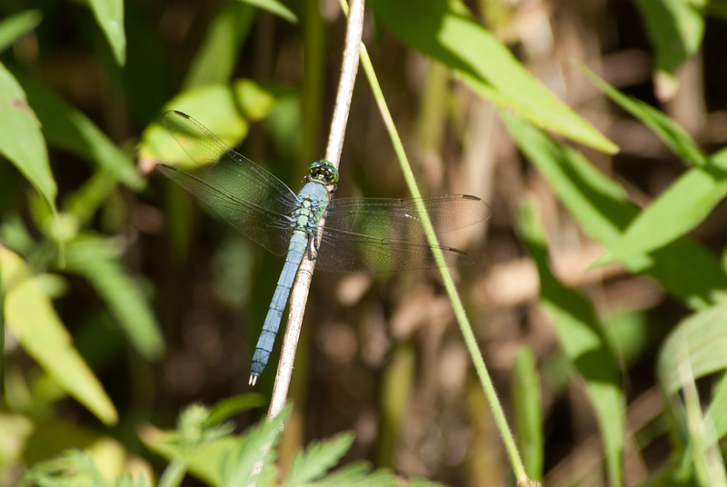 Dragon Fly (5)