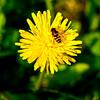 Little flower bee