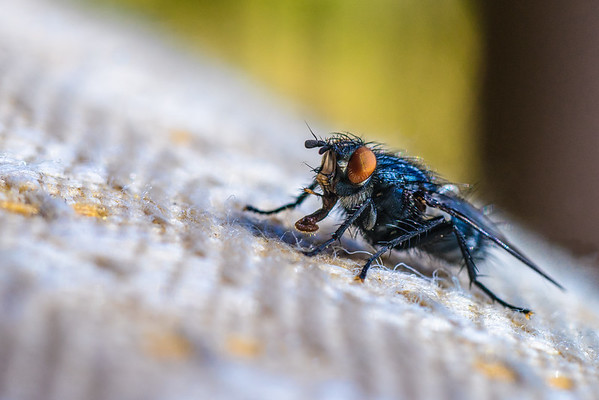 Fly on a Seat