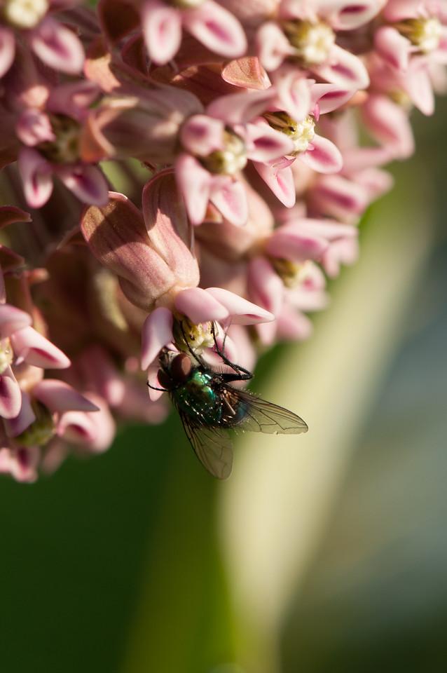 Fly (8)