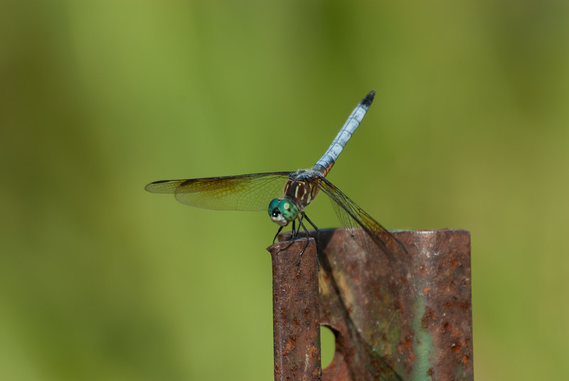 Dragon Fly (9)