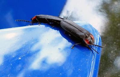 Unknown bug love!