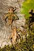 crickets8993(8x12)