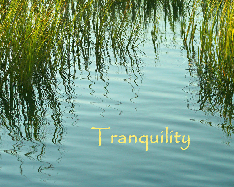 Marsh grass reflected in calm water.