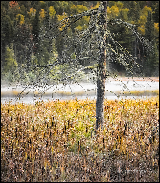 <h3>Algonquin Ont.</h3><h5>Canon40D, Canon70-200 at 70mm, Sing-Ray LB polarizer, 1/30s at f/4.0</h5>