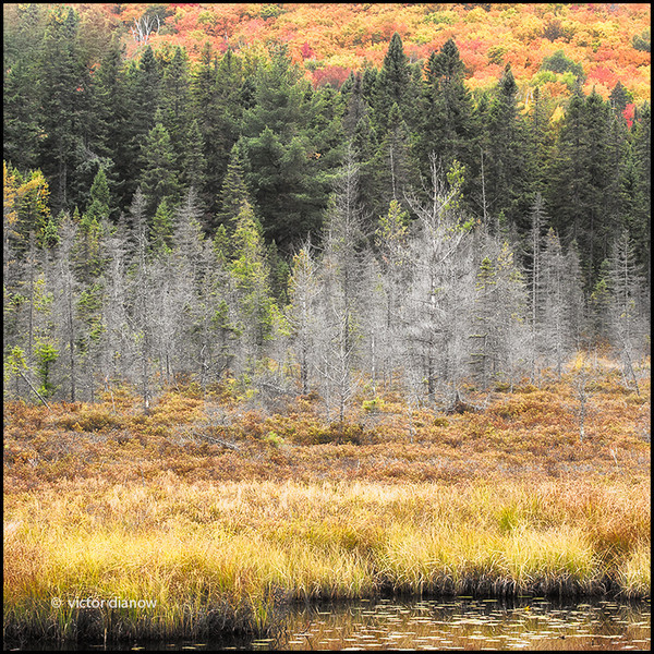 <h3>Algonquin Ont.</h3><h5>Canon40D, Canon70-200 at 140mm, Sing-Ray LB polarizer, 15s at f/16.0</h5>