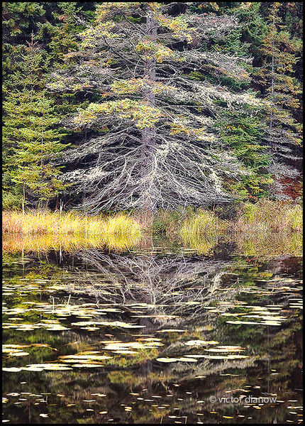 <h3>Algonquin Ont.</h3> <h5>Canon350xt, Sigma28-70 at 70mm, Sing-Ray LB intensifier<br> 1/20s at f/11.0</h5>