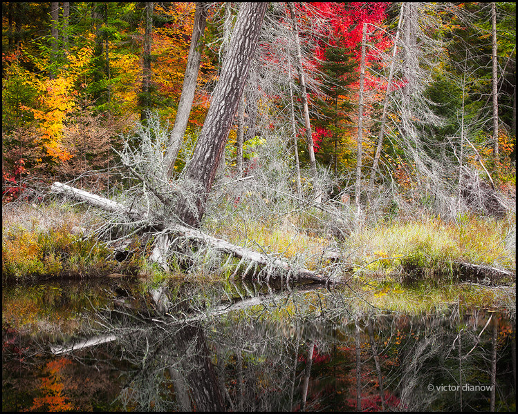 <h3>Algonquin Ont.</h3><h5>Canon40D, Canon70-200 at 70mm, Sing-Ray LB polarizer, 0.6s at f/16.0</h5>