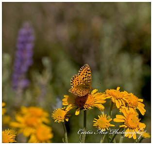 Butterfly at the flowers.