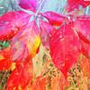 Fall Color.<br /> Codorus State Park, Pa.