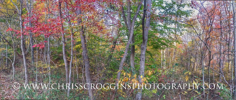 Autumn Trees along the NCR Trail.