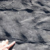 Ripple marks in turbidites of the Ross Formation