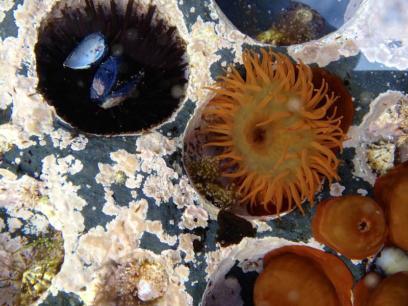Colorful wildlife in tidal pools