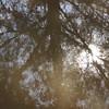 Reflection-Ein Saadim Nature Reservation