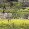 Ein Saadim Nature Reservation