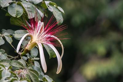 Chan Chich, Belize