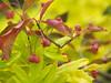 Berries at Fritz Gardens