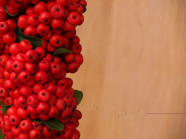 Red Firethorn (Pyracantha coccinea) berry cluster