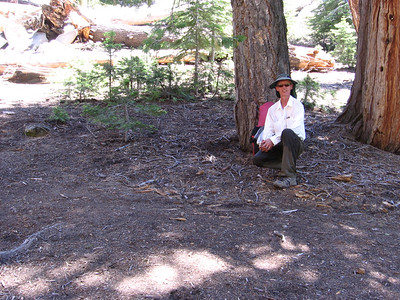 A rest stop during the ascent to Sunrise High Sierra Camp. Note darkened upper pantlegs; the temperature was in excess of 90 degrees F and I was taking the opportunity to soak my pantlegs and sleeves and even hat every time I was near a stream. Reddish-barked tree on right is an Incense Cedar.