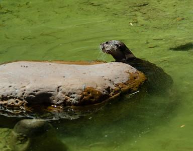 2015 Jacksonville Zoo
