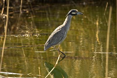 Jamica Bay Wild life