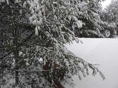 Janaury 2013 snowstorm