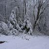 Snowy western hemlocks.