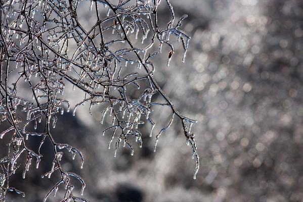 January Ice Storm 2010