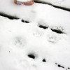 This one is for January 2012 <br /> Feeding critters on my back deck. Something tells me these are not cat tracks.