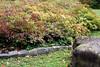 Autumn bush and big stone