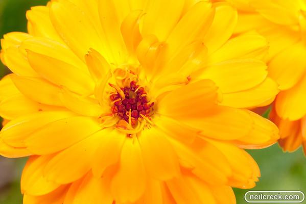 Jill's Garden Macro - 111126