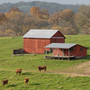 H2I084D Cows and red barns - Jo Daviess County