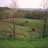 H2E068 - Cows near Elizabeth, IL