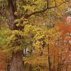 Fall Color, Hanover