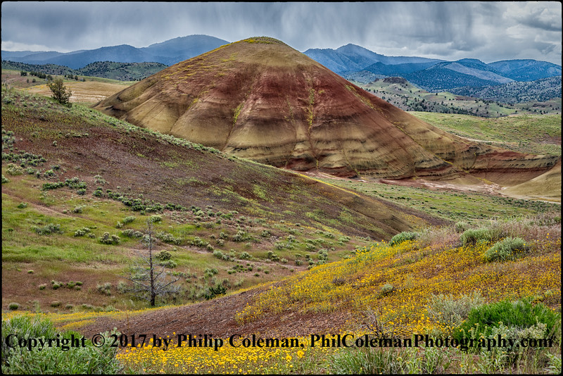 Spring Flowers on the Painted Hills
