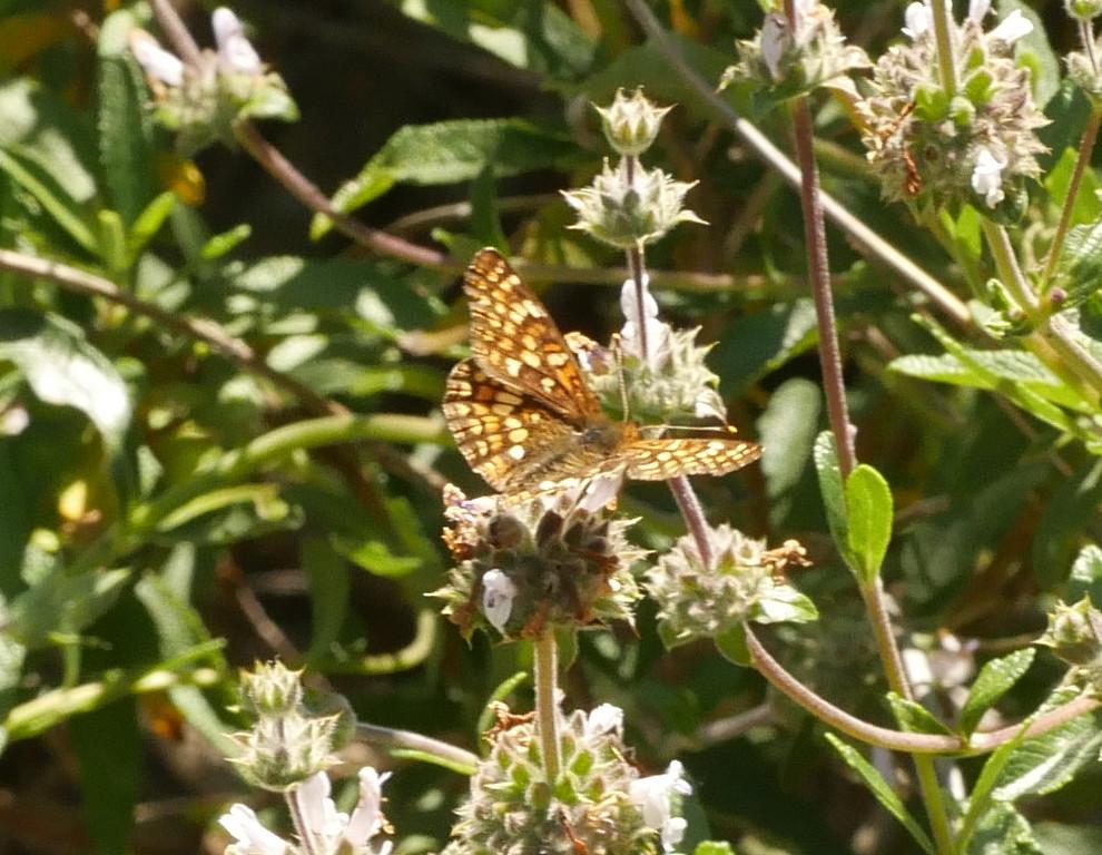 orange butterfly_P1050225
