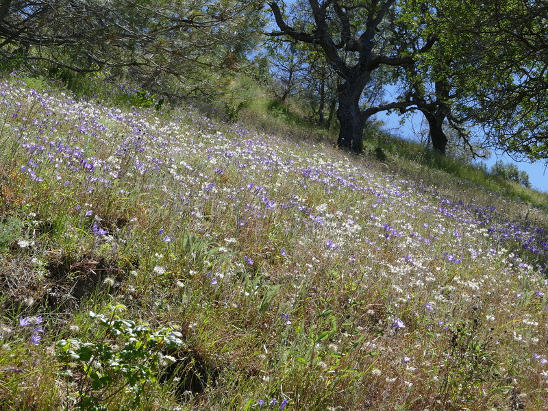 This photo gives a feeling for the abundance of flowers in this favoirable year.  We saw a number of grassy slopes well populated with different flowers.
